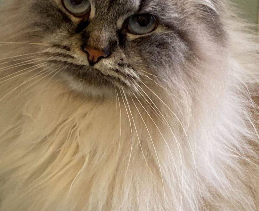 Toxoplasmosi: una malattia parassitaria molto diffusa nei gatti